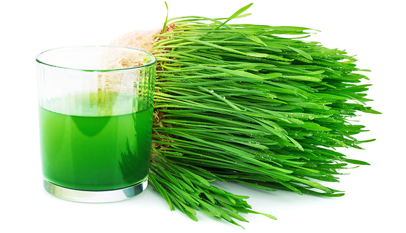 herba de blat - hierba de trigo - wheatgrass