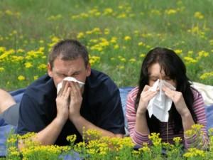 Al·lèrgia Alergia Primaveral